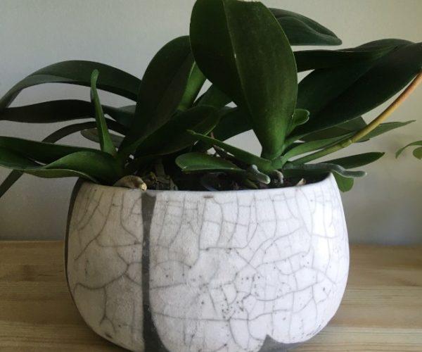 objet et plante